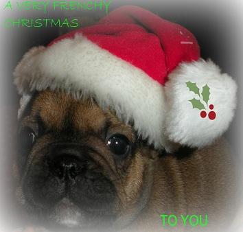 English Bulldog Puppies Ny Classact Kennel